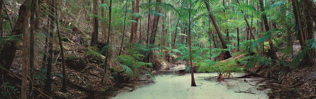 The Unique Eco-system of Fraser Island