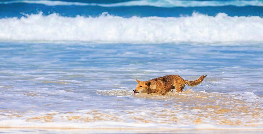 Fraser Island Tours VIII