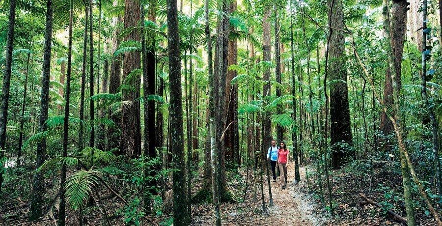 fraser island forest